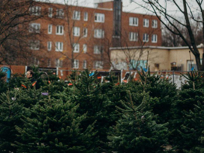 Kerstboomparadijs
